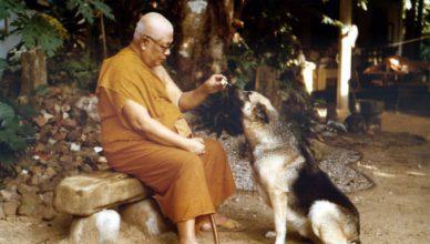 buddhadhasa